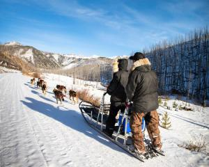 Absaroka Montana Dog Sledding