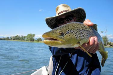 Blue ribbon trout fishing